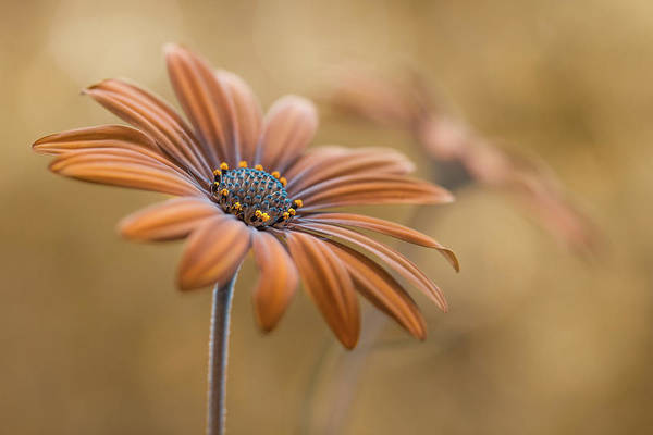 Wall Art - Photograph - Summer Glow by Mandy Disher