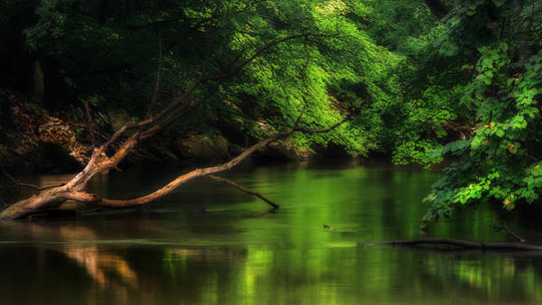 Photograph - Summer Green by Bill Wakeley