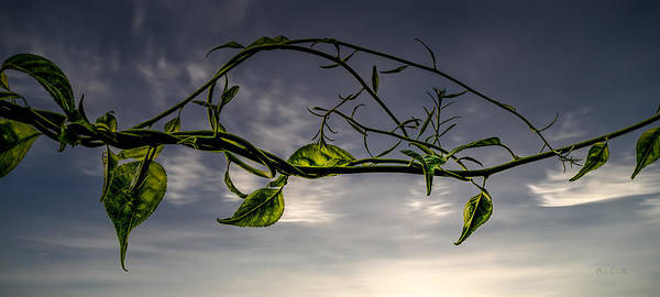 Photograph - Summer Green by Bob Orsillo