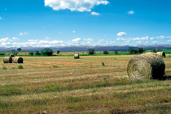 Barley Painting - Summer Hay 2 by Terry Reynoldson