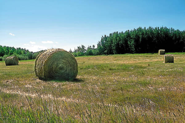Barley Painting - Summer Hay by Terry Reynoldson