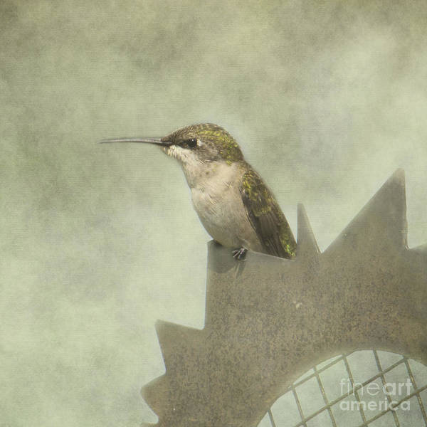 Photograph - Summer Hummer by Pam  Holdsworth