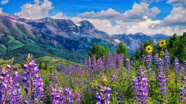 Summer In Telluride Art Print