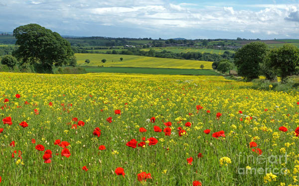 Photograph - Summer In The Countryside by David Birchall
