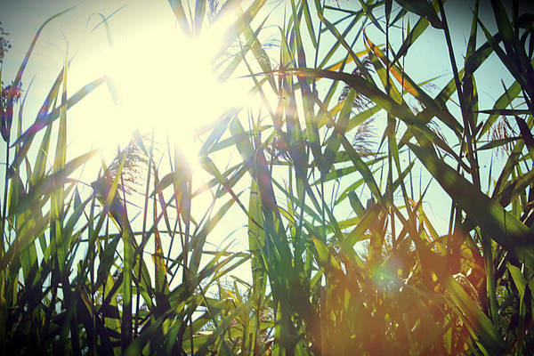 Brillante Photograph - Summer Is Coming by Mechi