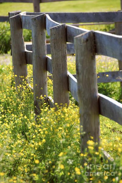 Wall Art - Photograph - Summer Meadow by Elena Elisseeva