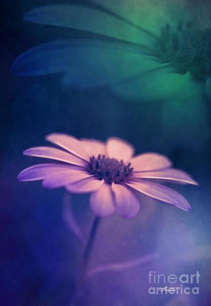 Photograph - Summer Night Song by Jutta Maria Pusl