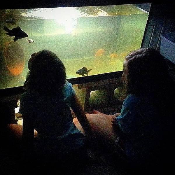 Japanese Koi Photograph - ..::summer Nights::.. - #goldfishunion by Joseph Brown