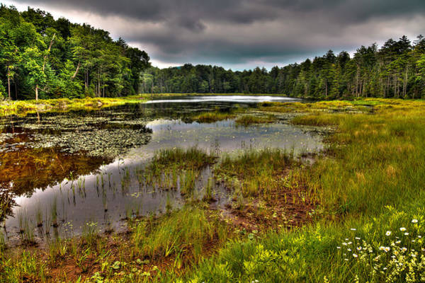 Photograph - Summer On Fly Pond - Old Forge by David Patterson