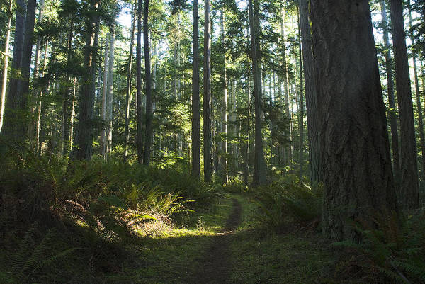 Photograph - Summer Pacific Northwest Forest by Yulia Kazansky