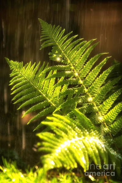 Ferns Photograph - Summer Rain by Jane Rix
