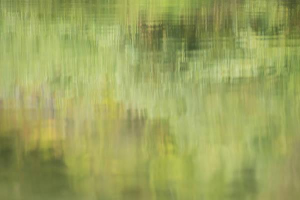 Photograph - Summer Reflections by Loree Johnson