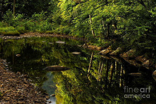 Trout Stream Photograph - Summer Reflections by Thomas R Fletcher