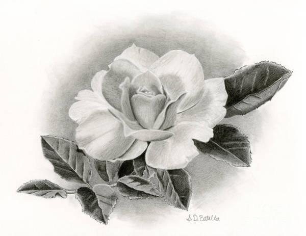 Black And White Nature Drawing - Vintage Rose by Sarah Batalka