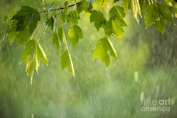 New Leaf Photograph - Summer Shower by Diane Diederich