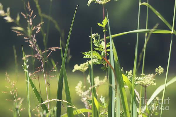 Photograph - Summer Solstice by Jutta Maria Pusl