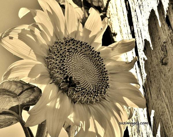 Photograph - Summer Sun by Susie Loechler