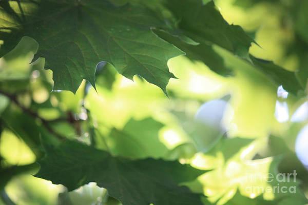 Photograph - Summer Sunshine by Carol Groenen