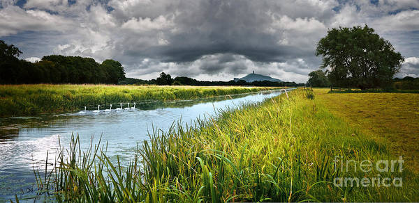 Somerset County Photograph - Summer Swans by Simon Plant