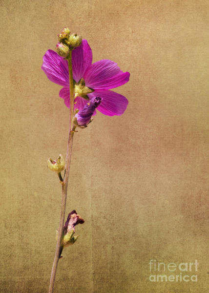Photograph - Summer Time Bloom by Pam  Holdsworth
