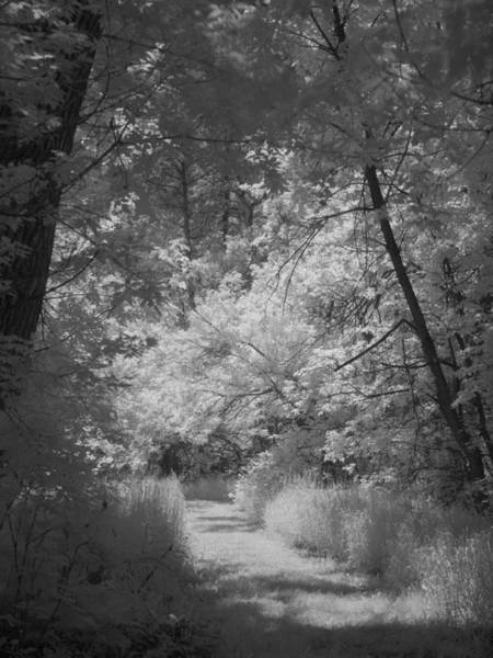 Photograph - Summer Trail by HW Kateley