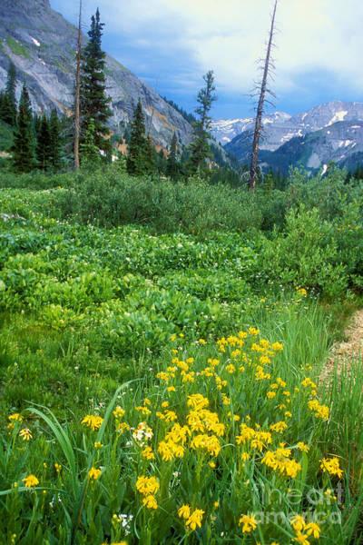 Photograph - Summer Vista Near Durango by Teri Brown