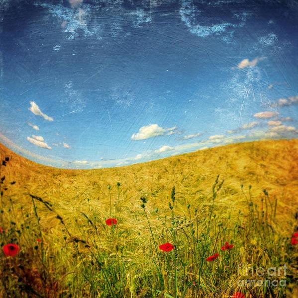 Felder Wall Art - Photograph - Summer Wave by Dirk Wuestenhagen