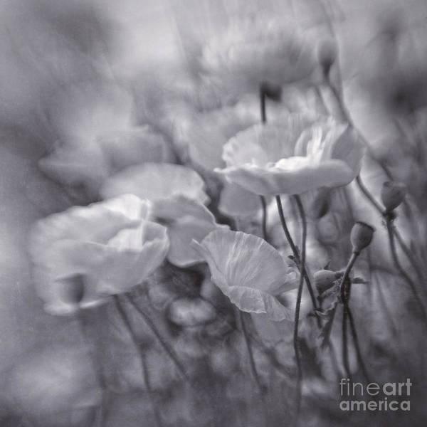 Blackandwhite Photograph - summer whipsers IIII by Priska Wettstein