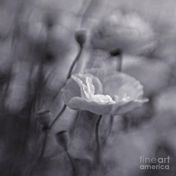 Blackandwhite Photograph - summer whispers III by Priska Wettstein