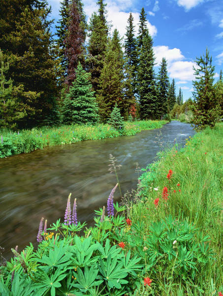 Deschutes River Photograph - Summer Wildflowers Bloom by Panoramic Images