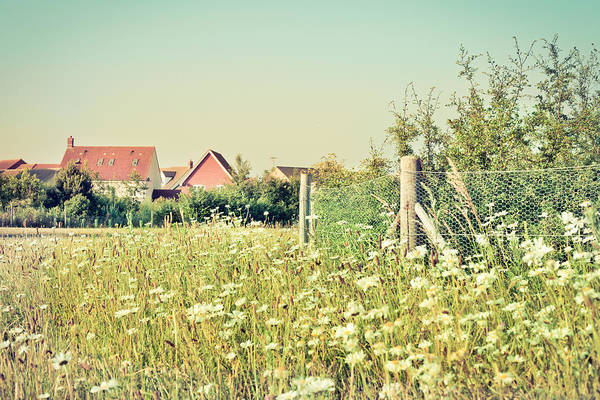 Boundaries Wall Art - Photograph - Summer Wildflowers by Tom Gowanlock
