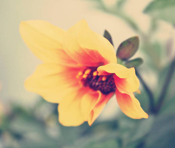 Wall Art - Photograph - Summer Yellow by Cathie Tyler