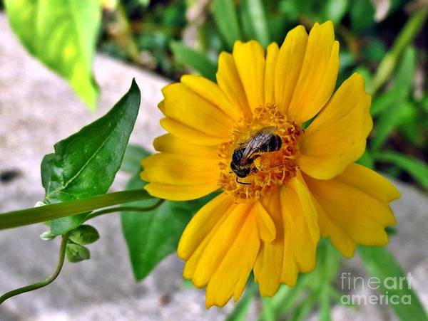 Wall Art - Photograph - Summer Yellow by Lonna Ours