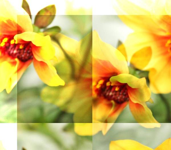 Wall Art - Photograph - Summer Yellow Two by Cathie Tyler