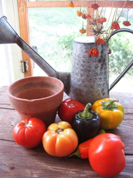 Photograph - Summer's Bounty   by Deb Martin-Webster