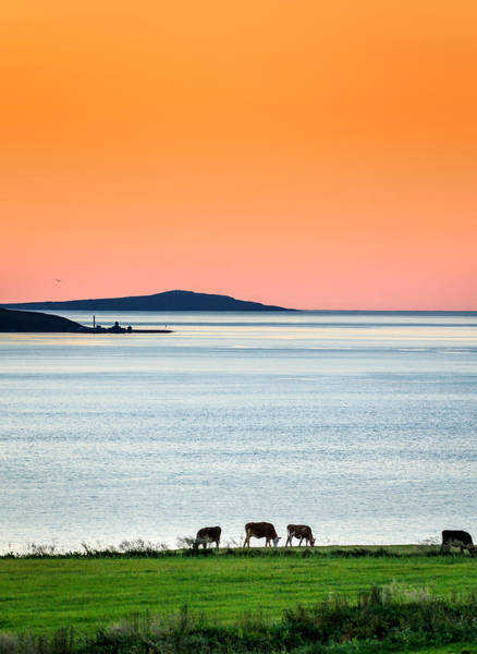 Sea Cow Photograph - Summertime In Iceland With The Midnight by Panoramic Images