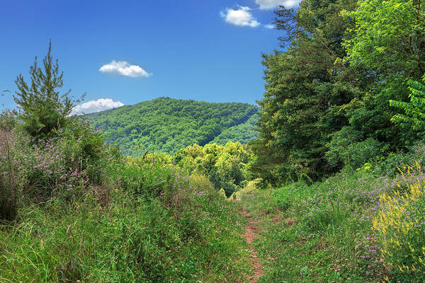 Photograph - Summertime Trail At The Gap by Mary Almond