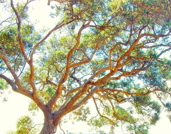 Photograph - Summertime Tree by Jocelyn Friis