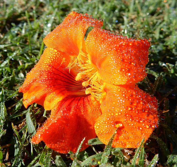 Photograph - Sun And Dew Kissed by Pamela Walton