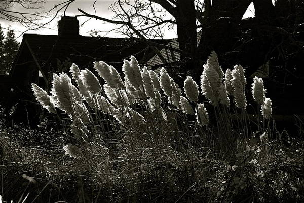 Photograph - Sun And Shadow by Alicia Kent