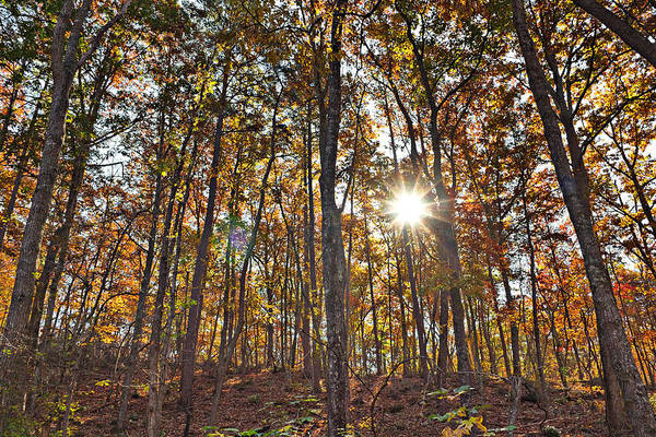 Photograph - Sun Beams Dance In Autumn Trees by Simply  Photos