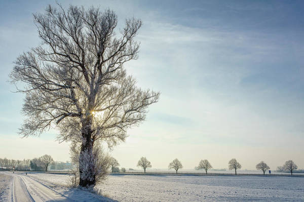 Skane Photograph - Sun Behind A Tree On Snow Covered Fields by Fredrik Nilsson