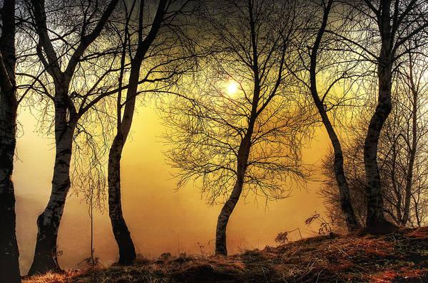 Photograph - Sun Behind The Trees by Roberto Pagani
