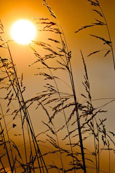 Photograph - Sun Flood by U Schade