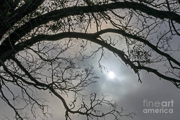 Photograph - Sun Fog Tree by Kate Brown