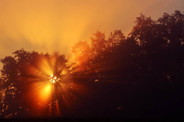 Sun Fog Trees-1 Art Print