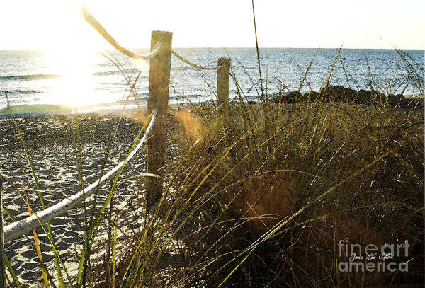 Photograph - Sun Glared Grassy Beach Posts by Janis Lee Colon