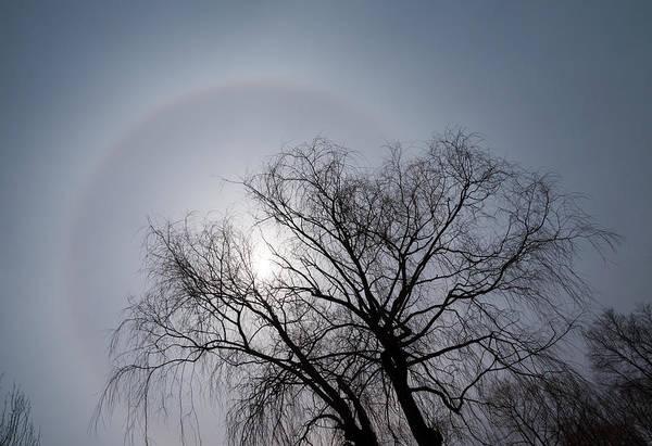 22 Degree Halo Wall Art - Photograph - Sun Halo Bare Trees And Silver Gray Winter Sky by Georgia Mizuleva