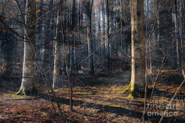 Digital Art - Sun In The Forest by Jutta Maria Pusl