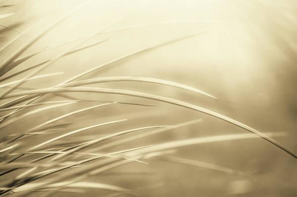 Photograph - Sun In The Grass by Carolyn Marshall